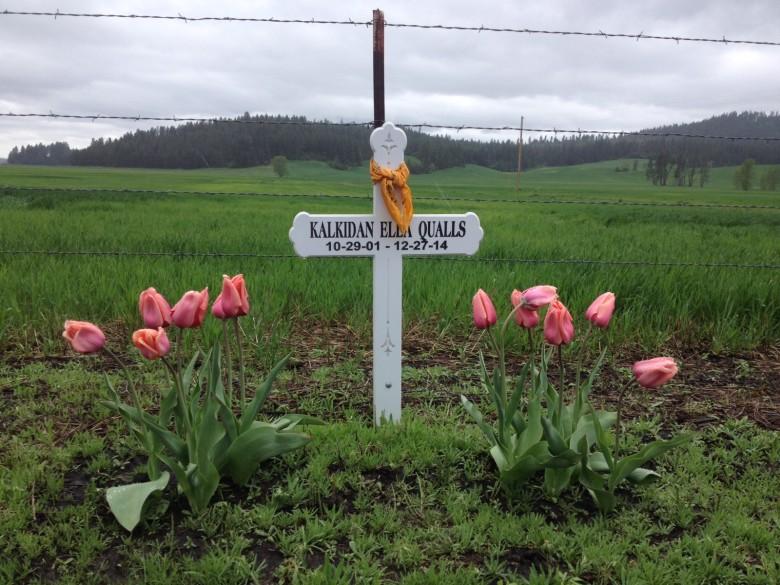 cross tulips