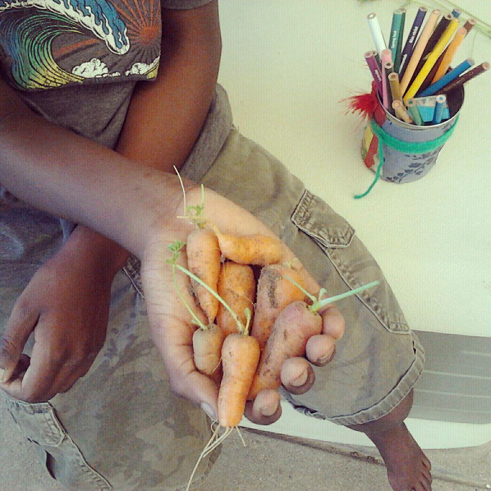 avi holding carrots